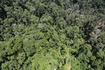 Tropical forest degradation for timber production in Borneo -- sabah_aerial_0760