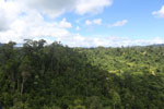 Forest heavily degraded by logging in Borneo -- sabah_aerial_0773