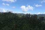 Logging road in Borneo -- sabah_aerial_0776