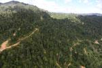Logging road in Borneo -- sabah_aerial_0783