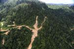 Logging road in Borneo -- sabah_aerial_0785