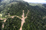 Logging road in Borneo -- sabah_aerial_0786