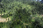 Forest heavily degraded by logging in Borneo -- sabah_aerial_0796