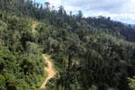 Logging road in Borneo -- sabah_aerial_0799