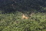 Logging road in Borneo -- sabah_aerial_0818