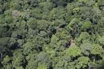 Borneo jungle -- sabah_aerial_0819