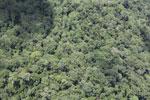 Borneo rain forest -- sabah_aerial_0820