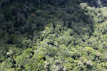 Borneo jungle -- sabah_aerial_0823