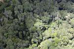 Logging area in Borneo -- sabah_aerial_0827