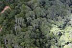 Logging area in Borneo -- sabah_aerial_0829