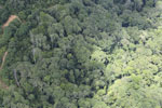 Logging zone in Borneo