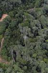 Logging area in Borneo -- sabah_aerial_0831