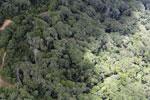 Logging zone in Borneo -- sabah_aerial_0832