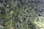 Logging area in Borneo