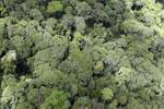 Borneo jungle -- sabah_aerial_0836