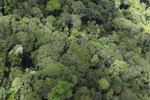 Borneo jungle -- sabah_aerial_0838