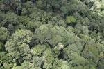 Borneo jungle -- sabah_aerial_0839