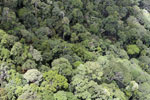 Borneo rain forest -- sabah_aerial_0840