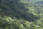Borneo jungle -- sabah_aerial_0843