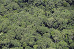 Rainforest canopy in Borneo