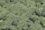 Rain forest canopy in Borneo