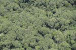 Tropical forest canopy in Borneo