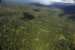 Tropical forest in Borneo -- sabah_aerial_0859