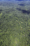 Tropical forest in Borneo -- sabah_aerial_0865
