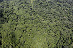 Tropical rain forest in Borneo -- sabah_aerial_0870