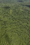 Tropical rainforest in Borneo -- sabah_aerial_0872