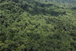 Tropical forest in Borneo -- sabah_aerial_0884