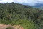 Logging road in Borneo -- sabah_aerial_0892