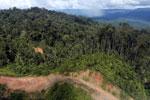 Logging road in Borneo -- sabah_aerial_0895