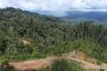 Logging road in Borneo -- sabah_aerial_0897
