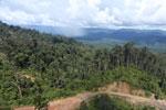Logging road in Borneo -- sabah_aerial_0898
