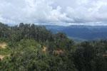 Logging road in Borneo -- sabah_aerial_0902