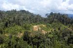 Logging road in Borneo -- sabah_aerial_0903