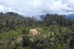 Logging road in Borneo -- sabah_aerial_0904