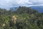 Logging road in Borneo -- sabah_aerial_0905
