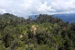Logging road in Borneo -- sabah_aerial_0906