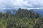 Logging road in Borneo -- sabah_aerial_0907