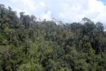 Tropical rainforest in Borneo -- sabah_aerial_0908
