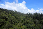 Tropical rain forest in Borneo -- sabah_aerial_0909