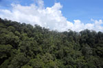 Tropical forest in Borneo -- sabah_aerial_0910