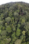 Tropical rainforest in Borneo -- sabah_aerial_0911
