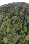 Tropical rain forest in Borneo -- sabah_aerial_0912