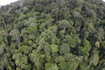 Tropical forest in Borneo -- sabah_aerial_0913