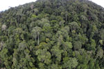 Tropical rainforest in Borneo -- sabah_aerial_0914