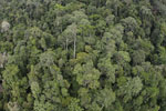 Tropical rain forest in Borneo -- sabah_aerial_0915