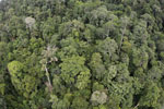 Tropical forest in Borneo -- sabah_aerial_0916